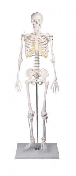 """Miniatur - Skelett """"Tom"""""""